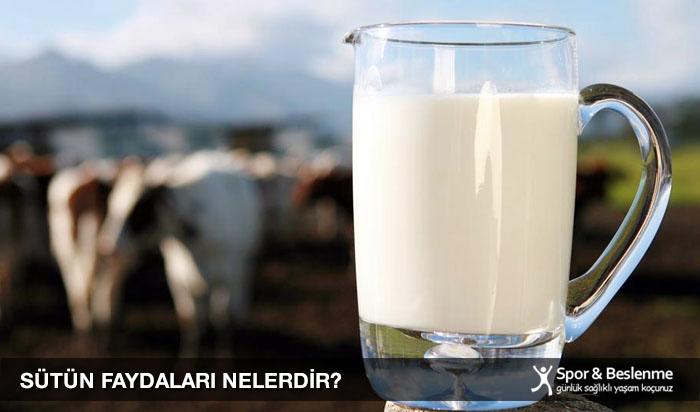 sütün faydaları nelerdir