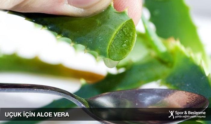 uçuk için aloe vera bitkisi