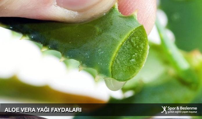 aloe vera yağı faydaları