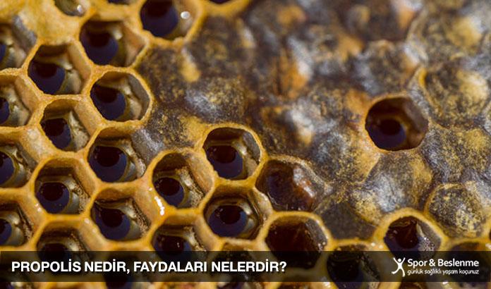 propolis nedir propolis faydaları nelerdir